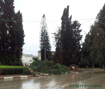 רחוב מעלה הגן ושדרת ראובן בבקר שאחרי קריסת העץ