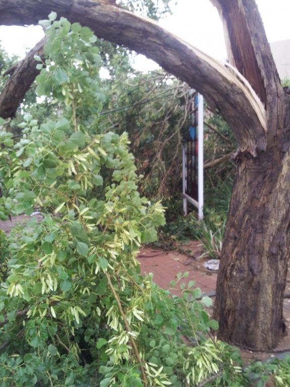 עץ שנכרת ליד מועודן התרבות