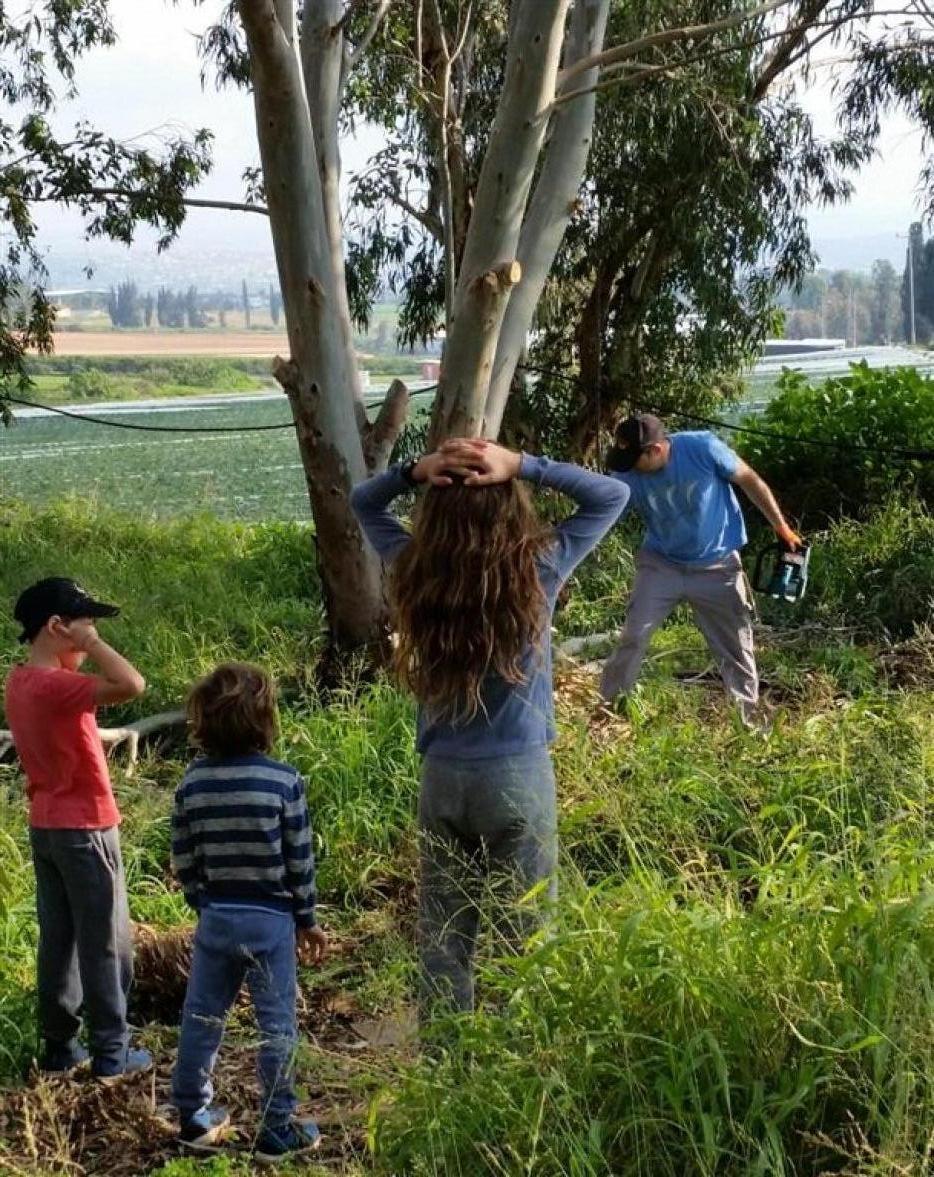 עמי לזר, אלדד אלרון וירון גלילי מנסרים והילדים מפנים את הענפים.