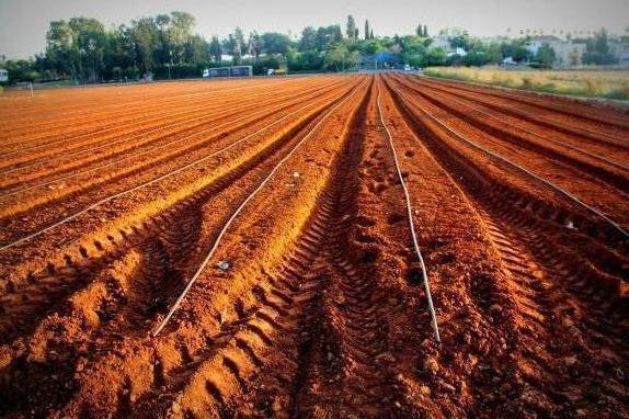 שדה חרוש מחכה לזריעה חדשה. צילום: יגאל שרגיאן