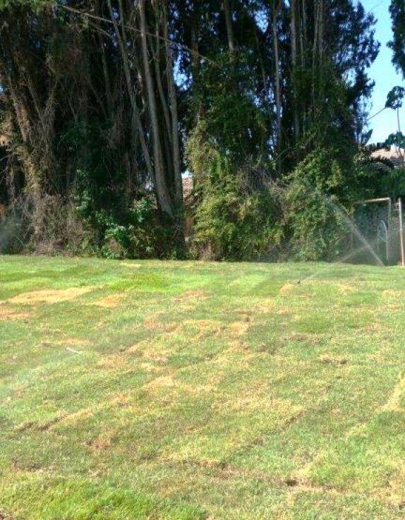 סובי סובי ממטרה והשקי את כל הדשא