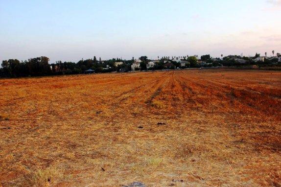 השדה לפני חידוש הגידול