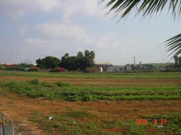 השדה מכוסה בניילון ומחכה לשתילה
