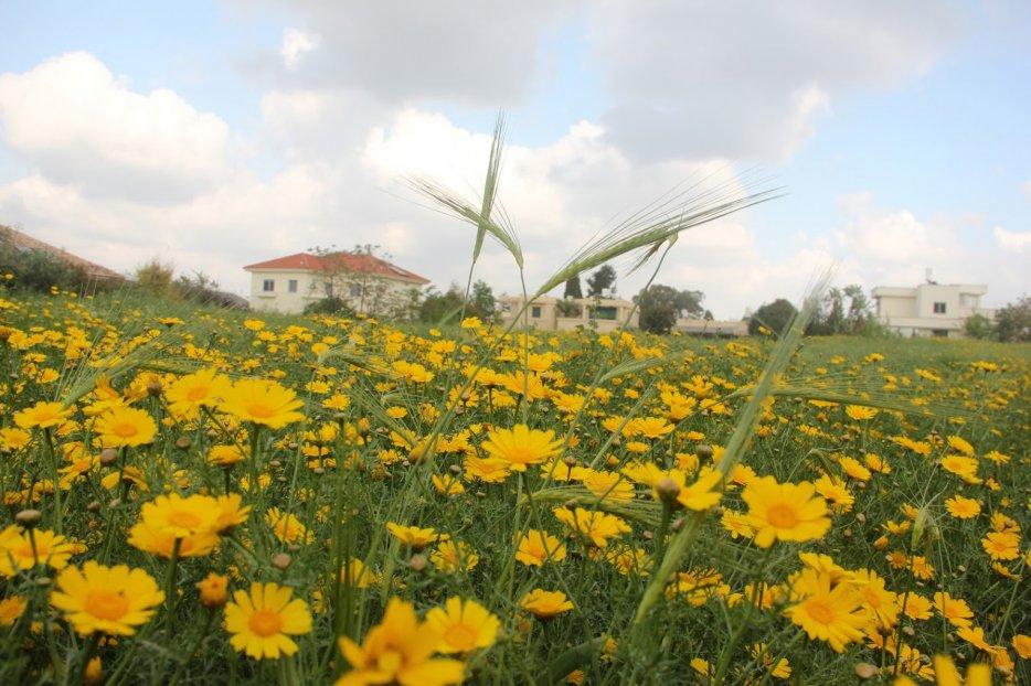 צילום: יגאל שרגיאן