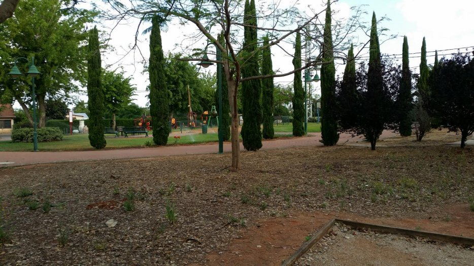 הגינה ליד המועדון מחכה להתחדשות הפריחה . צילום: ליליק