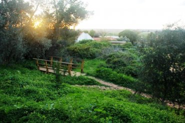3 - צילום: יגאל שרגיאן